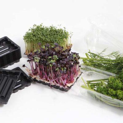 Plastic cups for garden herbs